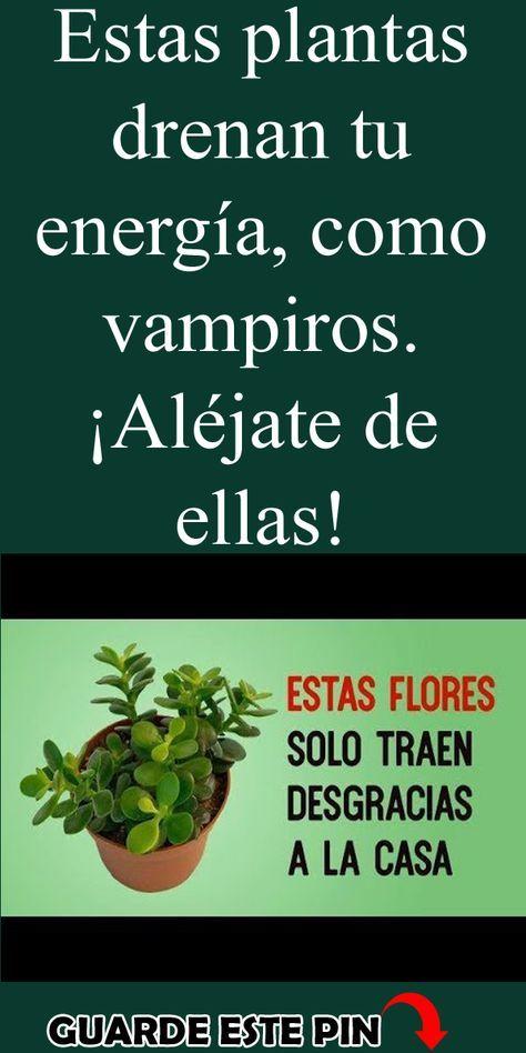 Plantas De Buena Suerte Para La Casa