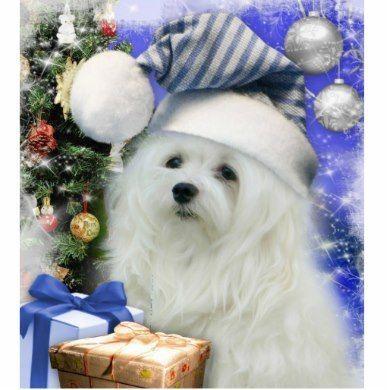 Perce neige la carte de Noël maltaise   Zazzle.fr   Malteser