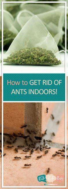 How to Get Rid of Ants Indoors!| Indoor Ant Repellent, Indoor Ant Killer, Indoor Ant Killer Spray, Pest Control #IndoorAntRepellent #IndoorAntKiller #PestControl #bestpestcontrolspray