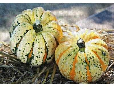 East Urban Home Thanksgiving Cotton Yellow Area Rug Pumpkin Natural Remedies Food