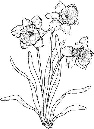 Click To See Printable Version Of Narcissus 4 Coloring Page In