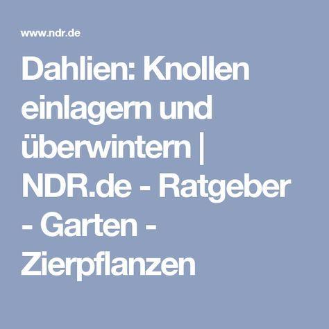 Dahlien Uberwintern Und Knollen Richtig Einlagern Dahlien Pflanzen Zierpflanzen