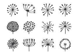 Resultat De Recherche D Images Pour Fleurs Sauvages Noir Et Blanc