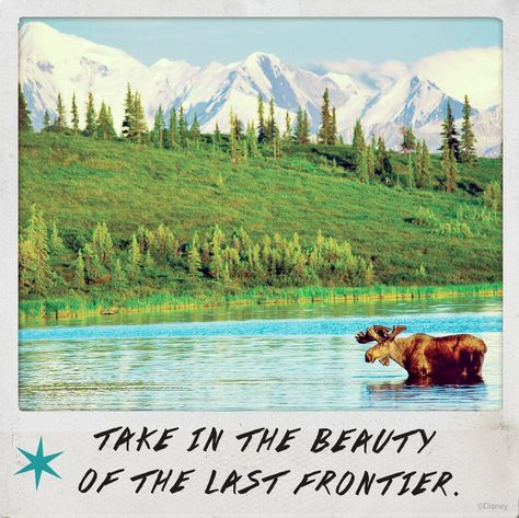 Discover the beauty and majesty on our Alaska family vacation. Home to Denali, the highest point in North America, you'll explore some of the most stunning landscapes in the world with us!