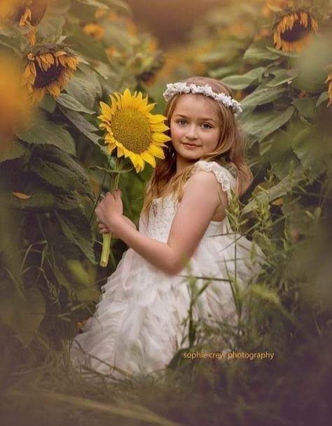 780 Sunflowers ideas in 2021   sunflower, sunflowers and daisies, beautiful flowers