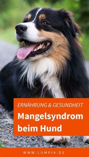 Mangelsyndrom Beim Hund Hunde Ernahrung Hunde Futter Hunde