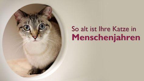 Sie Mochten Wissen Wie Alt Ihre Katze In Menschenjahren Ware Mit