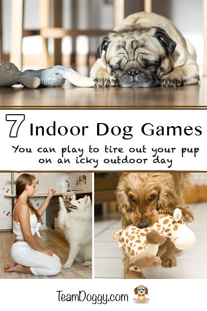 Stuck Inside On A Rainy Or Snowy Day With An Active Dog Try These