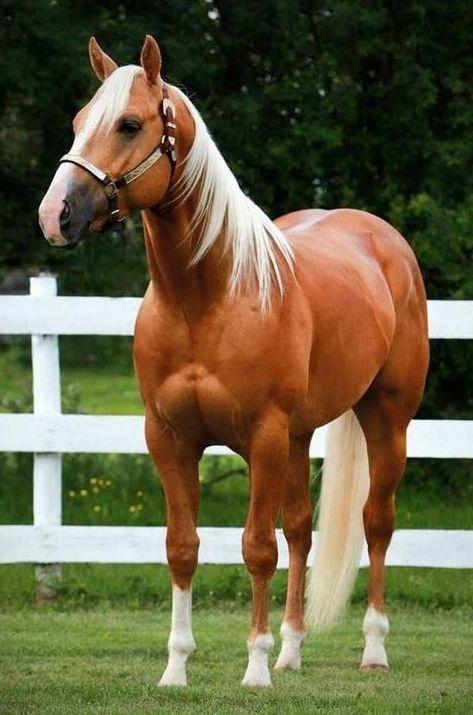 (notitle) - Horses - #Horses #notitle