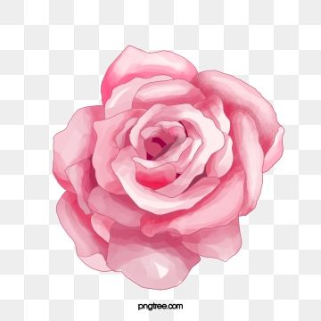 Watercolor Painted Pink Flowers Roses Watercolor Clipart Hand Painted Pink Flowers Png Transparent Clipart Image And Psd File For Free Download Flower Clipart Flower Png Images Watercolor Flower Background