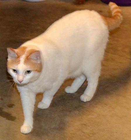 Adopt Lena On Cats Animals Adoption