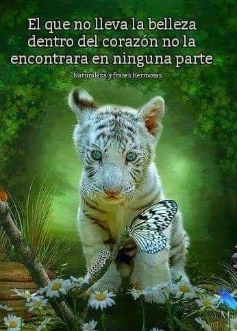 Pin De Consu En Frases Imagenes De Animales Tigre De