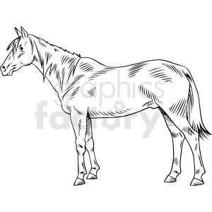 Black And White Realistic Horse Vector Clipart Clip Art Vector Clipart Horses