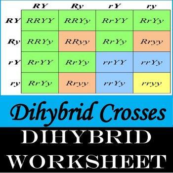Dihybrid Crosses Genetics By Brainiac Teacher Teachers Pay Teachers Dihybrid Cross Teacher Dihybrid Cross Worksheet