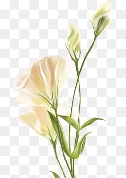 Lily White Flower Vector Flowers White Flower Png White Flower Bouquet