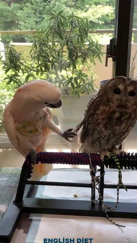Fellow birb doesn't understand personal space - #birb #doesnt #Fellow #personal #space #understand