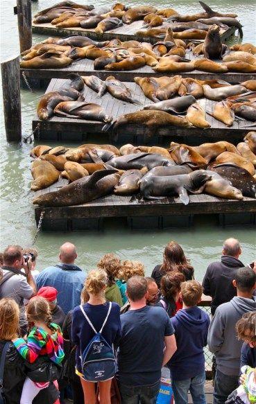 49 Choses à Faire à San Francisco | A La Fin De La Route