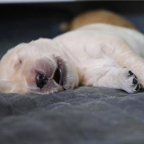 Sleeping puppy = Best thing in the 🌎 || Photo credit: @gloriouspaws via #PuppiesForAll #instagood #cat #L4L #cats