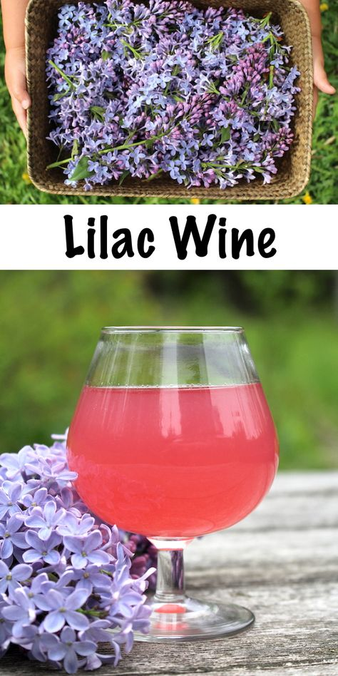 Homebrewing recipes Homemade Lilac Wine ~ Lilacs are delicious edible flowers and they make a wonderful homemade floral wine. Looking for a unique winemaking recipe Seek no further! Homemade Wine Recipes, Homemade Alcohol, Homemade Desserts, Blueberry Water, Mead Recipe, Peach Wine, Wine Yeast, Homebrew Recipes, Edible Flowers