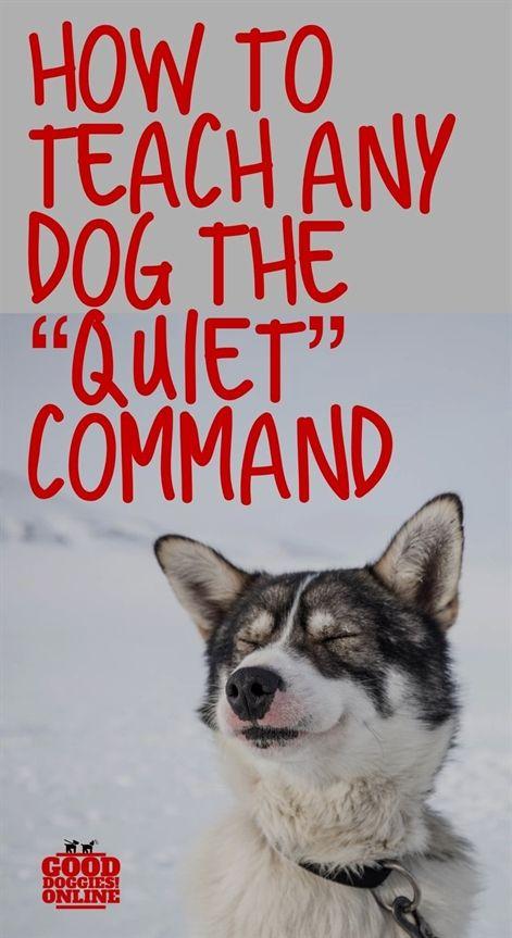 Dog Training Gunshots Dog Training Ri Dog Training 55337 Dog