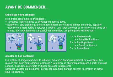 Entretenir Vos Orchidees Conseil Pratique E Leclerc Royan Epiphyte Conseils Pratiques Vegetal