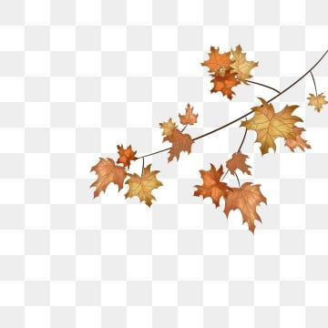 Ruchnoj Png Vektory Psd I Png Dlya Besplatnoj Zagruzki Pngtree How To Draw Hands Leaf Clipart Maple Leaf Drawing