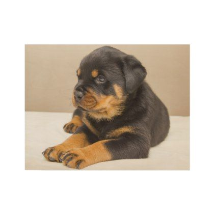 Cute Rottweiler Puppy Wood Poster Dog Puppy Dogs Doggy Pup Hound