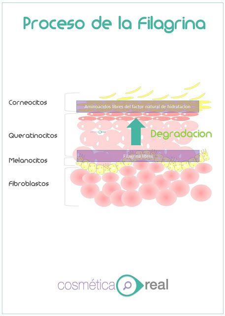 Informacion sobre la hidratacion de la piel