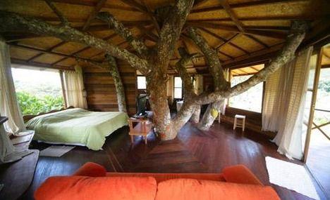 tree inside house home pinterest house tree houses and dream rooms - Tree House Inside
