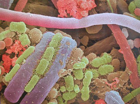 las bacterias son organismos unicelulares
