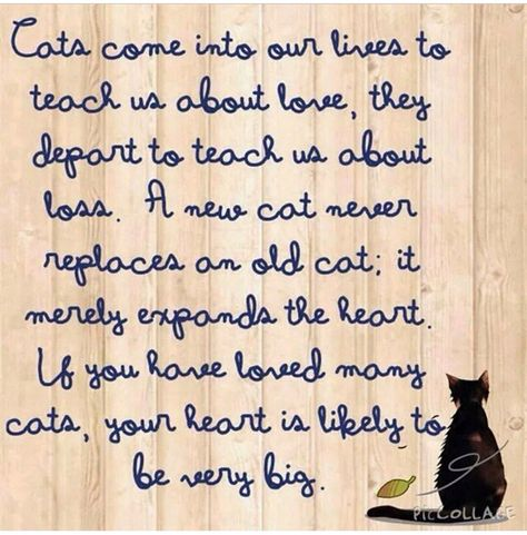 Cats come into our lives to teach us about love, they depart to teach us about loss.  A new cat never replaces an old cat, it merely expands the heart.  If you have loved many cats, your heart is likely to be very big...