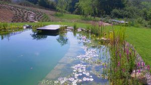 Why Europe S Natural Swimming Pool Trend Is Coming To America Natural Swimming Ponds Natural Swimming Pool Swimming Pool Trends
