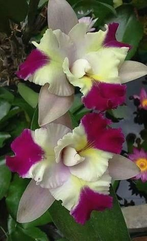 Gardening Hats For Men Sun Protection Gardening For Beginners In Bengali Meaning Of Virgin Gardening Ha Unusual Flowers Beautiful Orchids Beautiful Flowers