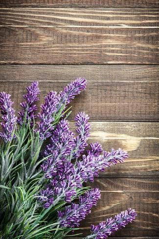 Photographic Print Lavender By Sea Wave 24x16in Flower Art Flower Backgrounds Backdrops Backgrounds