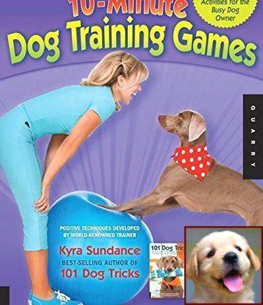 Dog Behavior Turning Back To You And Dog Training Courses Nz