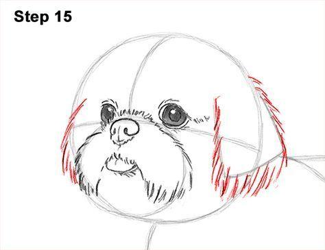 How To Draw A Cute Shih Tzu Puppy Dog 15 Shihtzu Animal