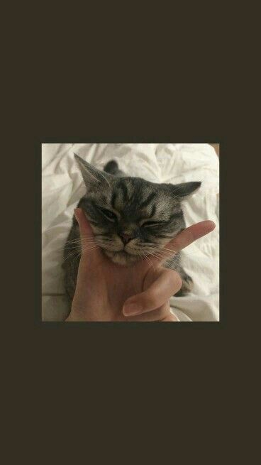 cat wallpaper wallpaper kucing aesthetic
