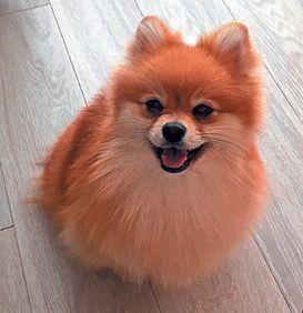 犬の足の病気 ケガの注意点 元気いっぱいな若い犬や犬種の注意点も いぬのきもちweb Magazine 犬の足 小型犬種 犬