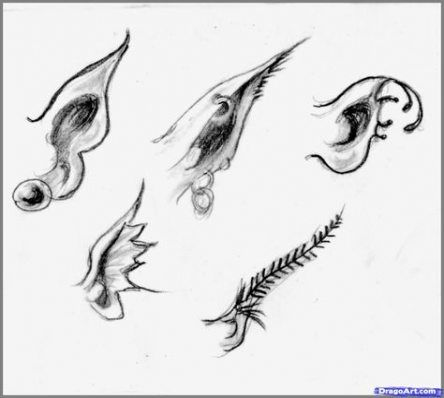 How To Draw Ears Step By Step Character Design References 41 Ideas Realistic Drawings Fairy Drawings Mermaid Drawings
