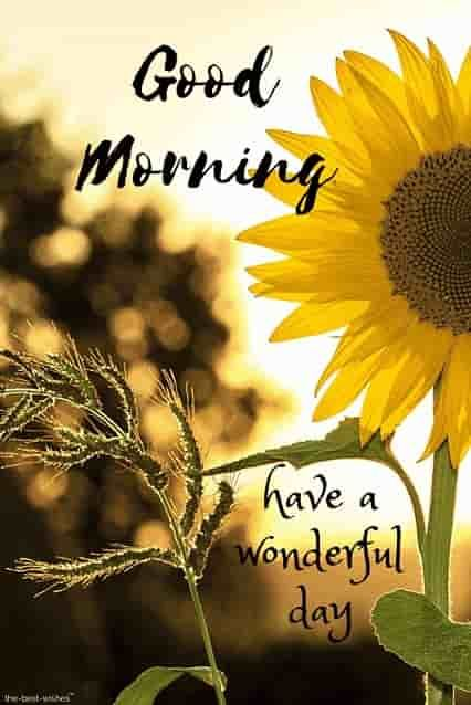 good-morning-wishes-with-sunflower