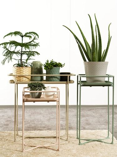 Kryddpeppar Plant Stand Indoor Outdoor Green 25 Plant