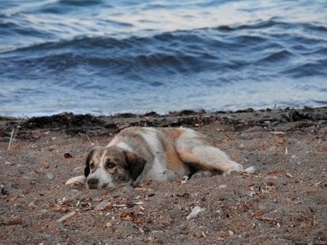 A Story When She Made A Decision That Would Change The Dog S Life Forever Therapy Dogs Homeless Dogs Dog Beach