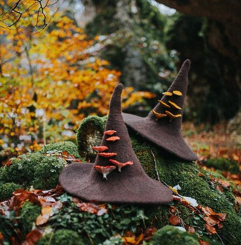 Witch hat with mushrooms amanita muscaria forest wizard hat felted hat from wool Halloween costume witch costume larp hat cosplay Felt Witch Hat, Felt Hat, Wool Felt, Witch Hats, Diy Witch Hat, Mushroom Hat, Mushroom Costume, Diy Hat, Witch Aesthetic