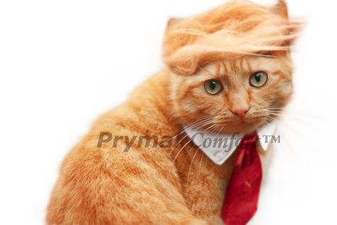 Prymal Comfort Trump Cat/Dog Costume for Halloween, Parties and Pictures