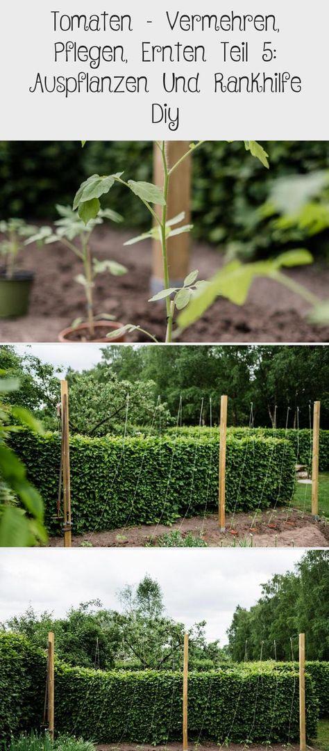 Tomaten Vermehren Pflegen Ernten Teil 5 Auspflanzen Und Rankhilfe Diy In 2020 Garten Plants Garden