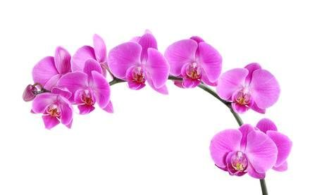 Fresh Purple Orchid Flower Isolated On White Background Purple Orchids Orchid Flower Orchid Photography