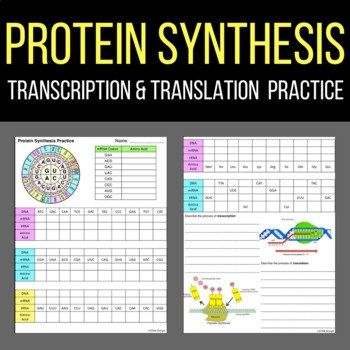 Protein Synthesis Worksheet With Answer Key Laney Lee Transcription And Translation Protein Synthesis Transcription Protein synthesis review worksheet answers
