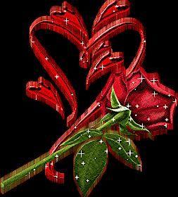 صور ورود متحركة رومانسية 2013 صور وردة حمراء جميله 2013 اجمل صور خلفيات ورود 2013 Lily Plant Care Lily Plants Flower Pots Outdoor
