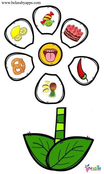 لعبة الحواس الخمسة للاطفال Senses Preschool Nursery Rhymes Preschool Crafts Preschool Activities