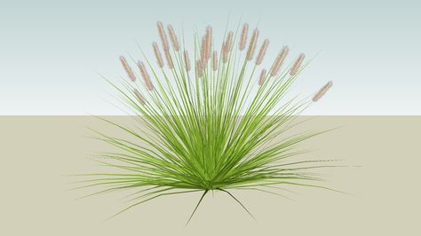 Large Preview Of 3d Model Of Dwarf Fountain Grass Large Fountain